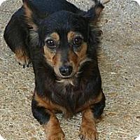 Adopt A Pet :: Minnie - Cantonment, FL