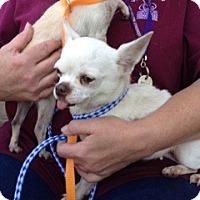 Adopt A Pet :: Scout - Milan, NY
