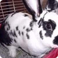 Adopt A Pet :: Poppers - Maple Shade, NJ
