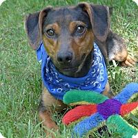 Adopt A Pet :: Peanut - Mocksville, NC