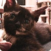 Adopt A Pet :: Zari - St. Louis, MO