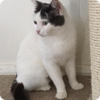 Adopt A Pet :: Daisy - Pittstown, NJ