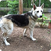 Adopt A Pet :: Ava -Courtesy List - Richmond, VA