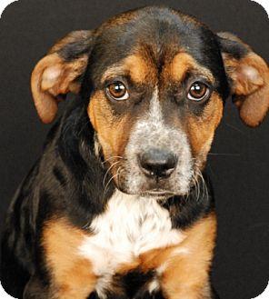 Hound (Unknown Type)/Rottweiler Mix Puppy for adoption in Newland, North Carolina - Georgia