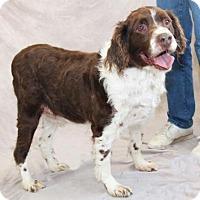 Adopt A Pet :: MI/Deuce - Kent, OH