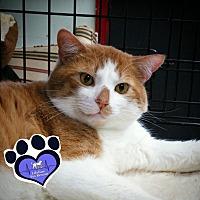 Adopt A Pet :: TJ - Huntsville, AL