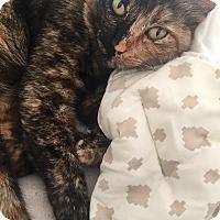 Adopt A Pet :: Georgia - Novato, CA