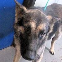 Adopt A Pet :: MUFASA - Red Bluff, CA