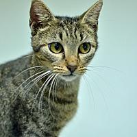 Adopt A Pet :: 10311995 - Brooksville, FL