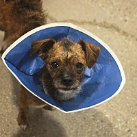 Adopt A Pet :: Cosmo - Redwood City, CA