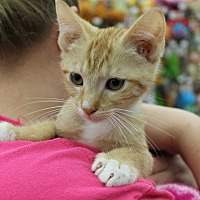 Adopt A Pet :: Tipsey - Wichita Falls, TX