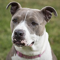 Adopt A Pet :: Bailey (foster) - Portland, OR