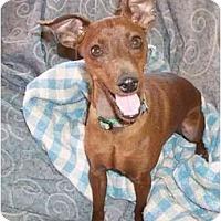 Adopt A Pet :: McGregor - Phoenix, AZ