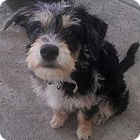 Adopt A Pet :: MARLEY - Mission Viejo, CA