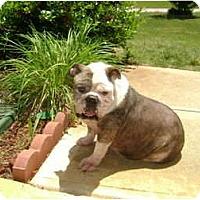 Adopt A Pet :: Scrappy - Winder, GA