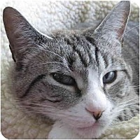 Adopt A Pet :: Chance - Portland, OR