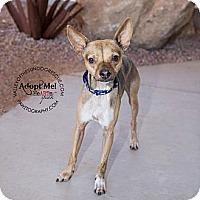 Adopt A Pet :: Sam - Mesa, AZ