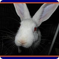 Adopt A Pet :: Gator - Williston, FL