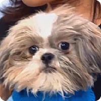 Adopt A Pet :: Paris - New York, NY