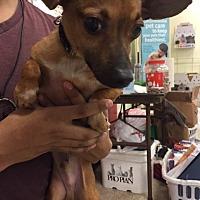 Adopt A Pet :: Jenkins - Fresno, CA