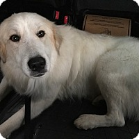 Adopt A Pet :: Caeser Manfred - Kyle, TX