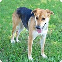 German Shepherd Dog Mix Dog for adoption in Salem, New Hampshire - KAREN