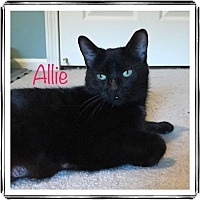 Adopt A Pet :: Allie (ove me) - Sterling Hgts, MI