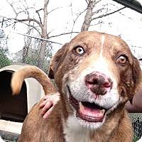 Adopt A Pet :: Axel - Albemarle, NC