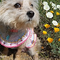 Adopt A Pet :: ANNIE - Inland Empire, CA