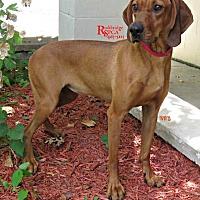 Adopt A Pet :: Tiny - Lexington, MA