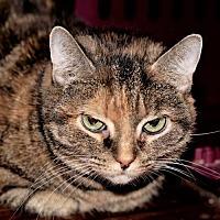 Adopt A Pet :: Darla - Bealeton, VA
