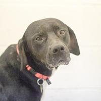 Adopt A Pet :: Koda - Mountain Home, AR