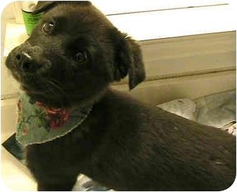 Retriever (Unknown Type) Mix Dog for adoption in Greensboro, North Carolina - Paisley