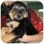 Photo 3 - Australian Shepherd/German Shepherd Dog Mix Puppy for adoption in Houghton, Michigan - Clara
