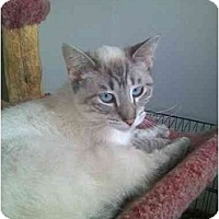 Adopt A Pet :: Sweetie - Washington Terrace, UT