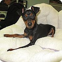 Adopt A Pet :: Jimmy - New York, NY
