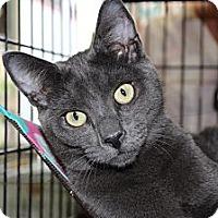 Adopt A Pet :: garrison - Santa Monica, CA