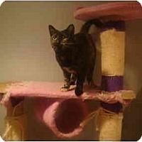 Adopt A Pet :: Mitzi - Muncie, IN