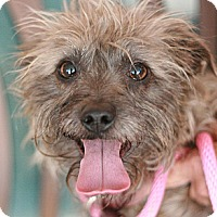Adopt A Pet :: Sadie - Canoga Park, CA