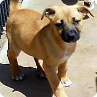 Adopt A Pet :: Baby Whitney - Oakley, CA