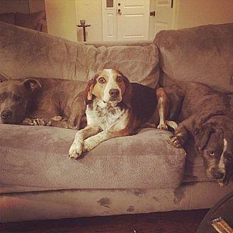 Hound (Unknown Type) Dog for adoption in New Bern, North Carolina - AC Slater