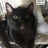 Adopt A Pet :: Bear - Santa Monica, CA