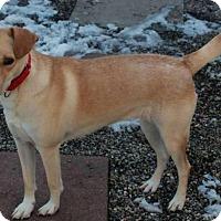 Adopt A Pet :: DJ - New Boston, MI