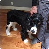 Adopt A Pet :: Lucky - Bellingham, WA
