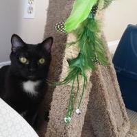 Adopt A Pet :: Jasmine - Allentown, PA