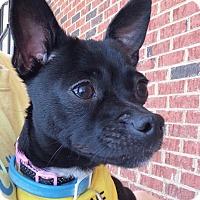 Adopt A Pet :: Luna - Durham, NC