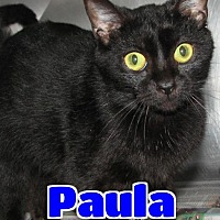 Adopt A Pet :: #84 Paula - Lawrenceburg, KY