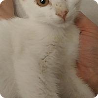 Adopt A Pet :: Lance - Tampa, FL
