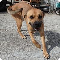 Adopt A Pet :: Nikki - Seguin, TX