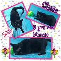 Adopt A Pet :: Chloe - Siler City, NC